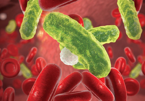 Bacteria floating in red cells in the bloodstream