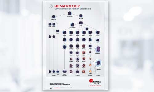 Hematology Cell Development Poster